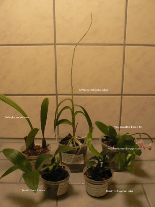pth-orchidehuset-2014-1.jpg