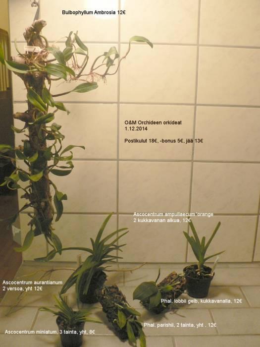 OM-orkideat-nimillä-ja-hinnoilla.jpg