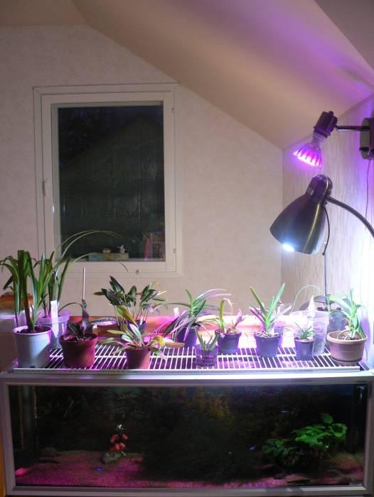 orkideat-hyötyvät-akvaarioveden-haihtumisesta-1-1.jpg