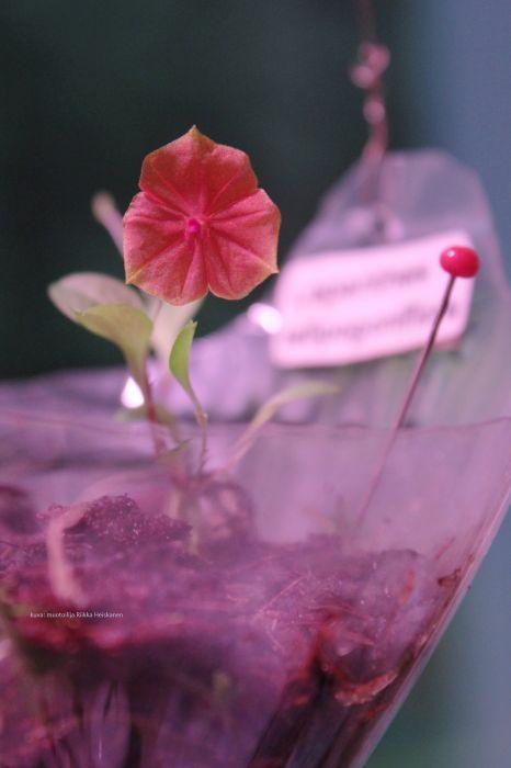pieni-kukka.jpg