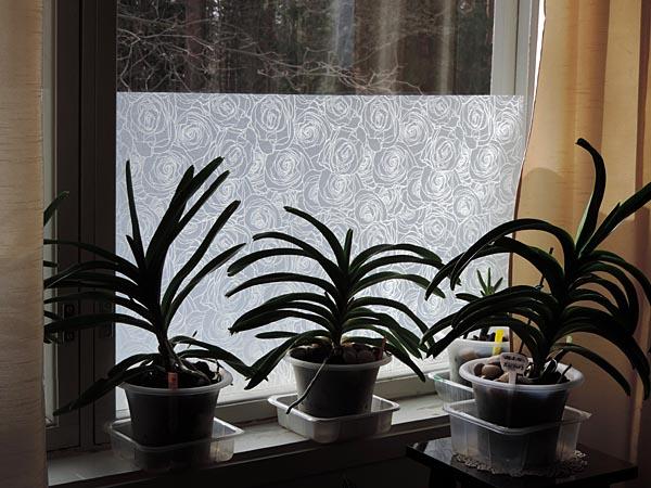 Staattinen kalvo ikkunaan
