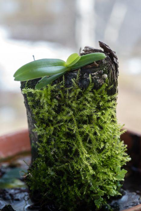 Orkidea-1-4.JPG