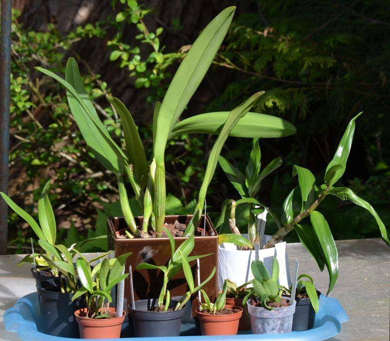 orkideat_yht-til_15_0016_fb.jpg