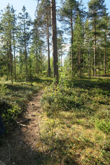 1_Neidonkengät_Rovaniemi_maasto_OP_pien_IMG_1002.jpg