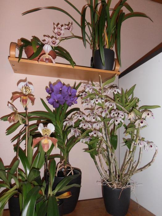 kukkiaa-191.JPG