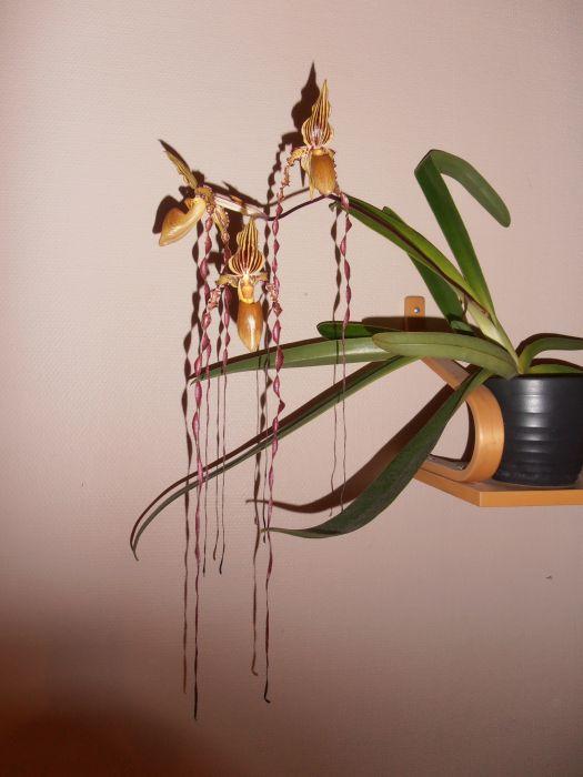 kukkia-049-1.JPG