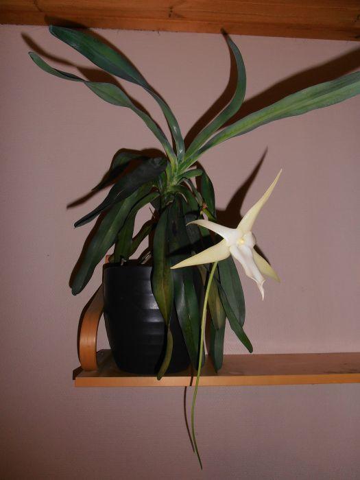kukkia-033.JPG