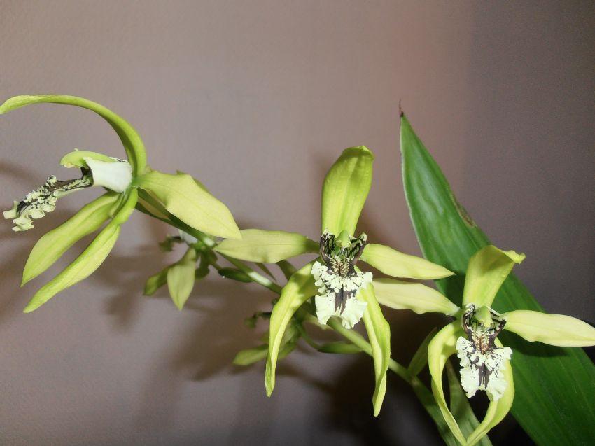 kukkia-035-1.JPG