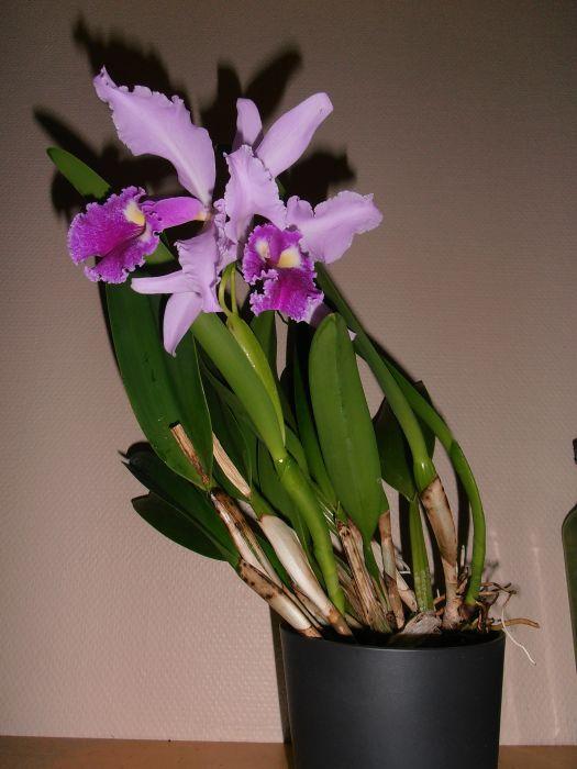 kukkia-008.JPG