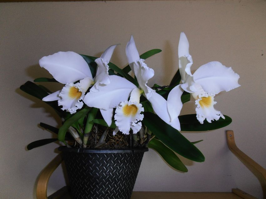 kukkia-009.JPG