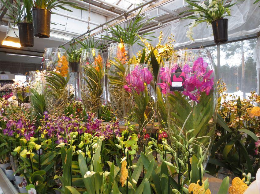 Orkideapäivä-001.JPG